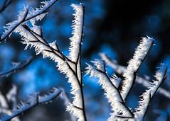 needles of ice (hloklm) Tags: eis raureif eisnadeln tiefenschrfe eisstruktur