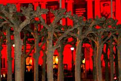 The Asian Art Museum (evie22) Tags: sanfrancisco party sports night canon fun football cityhall nfl celebration americanfootball 2016 sb50 canon7dmarkii superbowl50