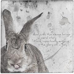 You And I Both (Jeric Santiago) Tags: pet rabbit bunny animal tongue lyrics conejo photograph lapin hase kaninchen jasonmraz   youandiboth winterrabbit