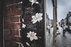 fading flowers (berberbeard) Tags: street urban germany deutschland photography fotografie bokeh linden wideangle hannover tokina 24mm f28 weitwinkel manuallens minoltamd itsnotatrick berberbeard berberbeardwordpresscom ilce7m2