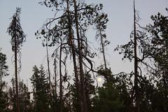 Diamond Lake, Oregon (nikname) Tags: trees oregon silhouettes sunsets cascades forests diamondlake stateparks cascademountainrange oregonstateparks usanationalparks stateforests highcascades usanationalforests diamondlakenationalpark
