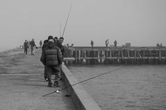 Fishermen at work (imbaoroh) Tags: sanfrancisco california street blackandwhite bw white fish black sports water sport photography blackwhite fishing fisherman san francisco fishermen pole sanfran