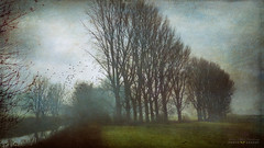 why (silviaON) Tags: morning trees mist landscape flypaper kerstinfrankart