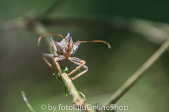 Argentinien_Insekten-78 (fotolulu2012) Tags: tierfoto