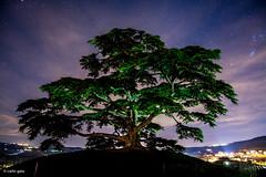 Il Cedro (carlogaia) Tags: sky clouds stars nuvole nightshot cedar libano langhe stelle morra cedro annunziata