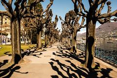 The Path (petia.balabanova) Tags: old trees lake alberi switzerland shadows path ombre svizzera lugano lungolago 2470mm nikond800