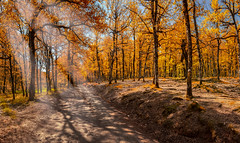 (Stavros A.) Tags: road travel autumn trees wallpaper vacation panorama green fall tourism nature field grass forest spectacular landscape greek photography countryside spring high oak woods scenery colorful natural bright outdoor path background country hill scenic meadow culture sunny landmark adventure foliage greece valley serene pathway attraction springtime ilia territory elis wheather geological peloponnese ελλαδα seasonleaves ileia πελοποννησοσ δασοσ ηλεια φθινοπωρο φολοη foloi nikond750 δασοσφολοησ