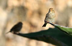 Sombra (vic_206) Tags: shadow bird bokeh sombra silueta canon300f4lis canoneos7d