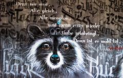Denn wir sind alle gleich, alle monoton und wenn einer wieder Farbe reinbringt, dann ist er wohl tot. Schriftsteller (S. Ruehlow) Tags: graffiti frankfurt graffito brcke westhafen waschbr friedensbrcke gutleut gutleutviertel westhafengebiet