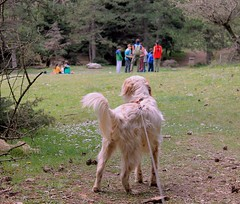 Peaceful moments (philos from Athens) Tags: dog woods athens springtime parnitha picmonkey