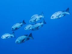IMG_0325 (eye[4]eye) Tags: egypt diving gypten tauchen bluewaves