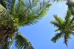 Summer Vibe (shineganancial) Tags: ocean trees light sea summer sun sunlight beach water sand rocks ray palm feeling sunray vibe