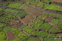 Fascinating Farming... (Mr.Enjoy) Tags: people terrain food dog man mountains colour green nature vegetables stone fruit work landscape living countryside scenery natural farmers outdoor unique interior rich steps terraces perspective hard grow hills special soil enjoy land vegetation growing walls organic tradition care patchwork volcanic madeira secular irrigation authentic steep method countrylife organisation plots agricultura fertile cultivated madeiraisland laborious argiculture levadas abobe poios simonzinophotography agricultado