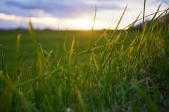 Icelandic sunset (Yann OG) Tags: sunset grass iceland sland coucherdesoleil herbe islande icelandic sigma30mm islandais