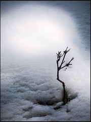 20160326-220 (sulamith.sallmann) Tags: schnee winter plants snow nature weather ast natur pflanzen tschechien czechrepublic ste wetter bumchen esko esk malpa sulamithsallmann krlovhradeckkraj