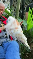 Key West 2015, Video 13 mp4, MVI 7461 (edgarandron - Busy!) Tags: bird birds keys florida keywest cockatoo floridakeys nancyforrester