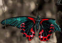 Last days of Life (BeNowMeHere) Tags: trip travel color colour nature animals turkey butterfly colorful istanbul colourful 500px lastdaysoflife ifttt benowmehere