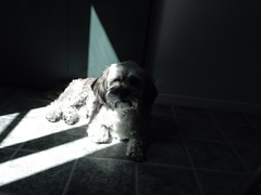 Between light and darkness. (PEEJ0E) Tags: door light shadow rescue dog sunshine darkness rusty bathing maltese basking