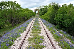 Bluebonnets on The Railroad (The Old Texan) Tags: railroad bridge texas bluebonnets