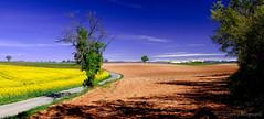 Ombre et Lumire.......... (Malain17) Tags: france composition landscape photography image pentax couleurs perspective photographers provence capture paysage arbre