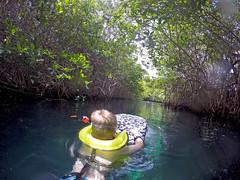Manatee Cenote, snorkeling in a mangrove (benjaminfish) Tags: beach mexico riviera maya tulum yucatn peninsula roo quintana 2016
