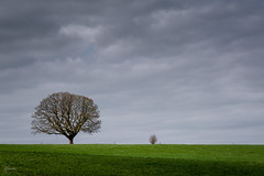 Prado Irlandes (kisko-Sonia) Tags: ireland tree verde green grass clouds landscape arbol nikon contemporary sigma paisaje cielo nubes campo prado irlanda hierba d7100