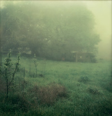 meadow & coops (lawatt) Tags: mist tree film apple fog oak meadow instant coop slr680 gen2 theimpossibleproject color600
