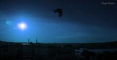 Blue (SergioCastroPhotography.) Tags: world viaje blue sunset sky travelling bird art nature azul turkey atardecer photography photo asia europa europe artistic sony awesome country creative istanbul cielo pjaro estambul turqua virado pas