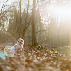 Rdi and the Jellyfish (nils_karlson) Tags: dog chien colour 120 mamiya film mediumformat germany landscape fuji ishootfilm 120film perro hund rz67 colournegative c41 400h 110mm mamiyarz67 fujipro400h pro400h carlzeissbiometar80mm ukfilmlab ukfl rudigerthelandscapedog rdigerthelandscapedog