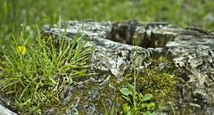vida tras la muerte (ebsigma) Tags: naturaleza rio river atardecer flor amarillo vida araa curva largaexposicion dilar