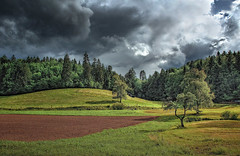 Before the storm... (palma13) Tags: travel trees tree nature colors field landscape nikon colours swiss natur fields hdr