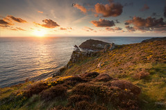 Cape and gorse (T_J_P) Tags: flowers light sunset sea golden rocks cornwall cliffs gorse capecornwall carngloose