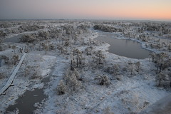 emeru purvs ziem (dzintarskronbergs) Tags: morning winter sunset panorama sunrise landscape december natural latvia swamp marsh bog moorland latvija purvs emeru