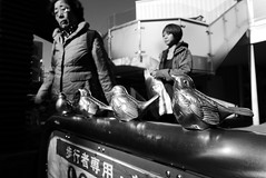 Birds Jiyugaoka  Tokyo (Julien Mailler) Tags: world street travel ladies white black bird japan asian japanese tokyo julien women asia nippon asie japon nihon japonais nationalgeographic jiyugaoka asiatique japonaise reflectionsoflife lovelyphotos jules1405 unseenasia earthasia mailler tokyote