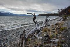 Dead wood (Alberto Cassandro) Tags: patagonia nature water argentina tierradelfuego ushuaia reflex nikon 2015 sigmalenses d5200 lakefagnano albertocassandrophotography