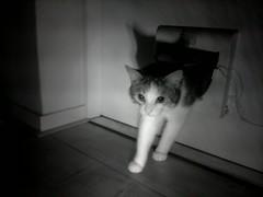 20160211-005121-i-1 (Catflap central) Tags: camera dog pet cats woof cat pi raspberry meow doggie catdoor catflap kattenluik katzenklappe catflapj2nnl taggingasdoguntilautotagginghasanoptout robotaggingisthedevil