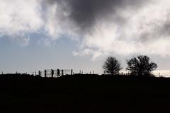 Early Morning Walk (David P Southern) Tags: england field silhouette skyline clouds walking farmland lancashire walkers