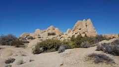 Jumbo Rocks at Joshua Tree NP