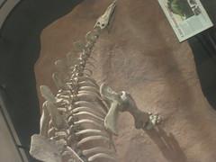 IMG_4225 (FigmentJedi) Tags: minnesota dinosaurs sciencemuseumofminnesota