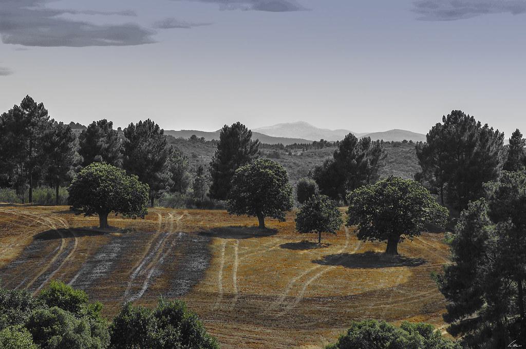 1600-nogueirinhas (92)