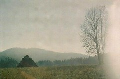 Blurred (Natalia Pikna) Tags: autumn trees film nature field grass analog forest woods blurred analogue hay flou