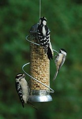 Mini Spiral Peanut Feeder 8.5 in Silver (bestbirdhouseusa) Tags: wordpress ifttt
