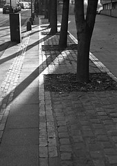 All about the shadows (Man with Red Eyes) Tags: street tree film monochrome analog blackwhite kodak pavement lancaster tmax400 50mmf14 shasow nikkors silverhalide 7901 pyrocathd bessar2s