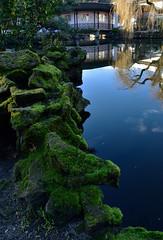 Chinese New Year, at Sun Yat-Sen Garden, Vancouver (roaming-the-planet) Tags: vancouver moss chinatown chinesenewyear sunyatsengarden