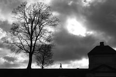 When the light breaks through (Birdhouse camper) Tags: sky blackandwhite tree silhouette clouds copenhagen denmark blackwhite fuji fujifilm x10