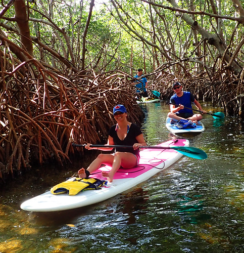 3_5_16 Kayak Paddleboard Tour Sarasota FL 08