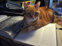 The Feline Bookmark (A.Davey) Tags: orangecat elsie rescuecat