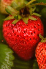 Strawberry is s good that it should be the size of a watermelon.. (miguel.santos.1029) Tags: macro nature closeup fruit strawberry yum strawberries fruta closeups morango morangos macroshot strawberrys macrophotography sabor closeupshot fruitlovers instastrawberry instastrawberries