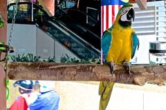 Parrot, Kuala Lumpur (minimi007) Tags: canon parrot malaysia kualalumpur g12 canonpowershotg12
