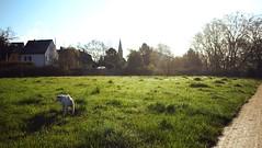 morning walk (jaadiee) Tags: morning light sky dog sun colors canon landscape buddy pancake 24mm mainz kostheim maaraue